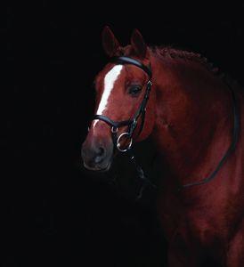 Horseware Rambo Micklem Competition Trense Warmblut schwarz