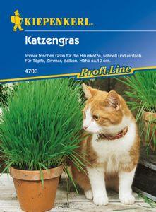 KIEPENKERL® Katzengras - Blumensamen