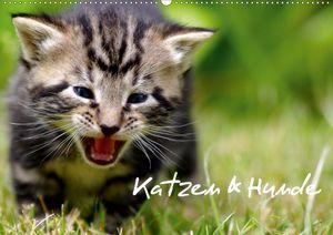 Calvendo Wandkalender Katzen & Hunde (Wandkalender 2021 DIN A2 quer) 2021 DIN A2