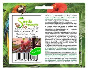 10x Ricinus communis Rizinus Wunderbaum Garten Pflanzen - Samen ID160