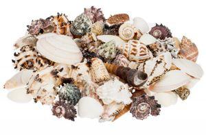 Muschelmix large 0,5kg | Bastelmuscheln | Deko Muschel | Deko Schnecken | maritime Dekoration