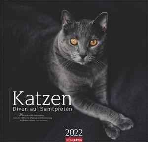 Katzen - Diven auf Samtpfoten - Kalender 2022