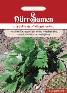Dürr Samen - Liebstöckel/ Maggikraut