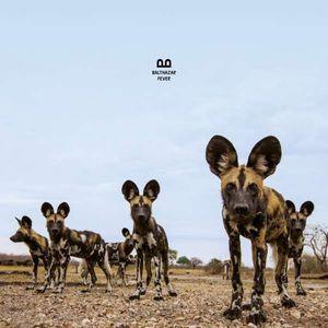 Balthazar - Fever -   - (CD / Titel: A-G)