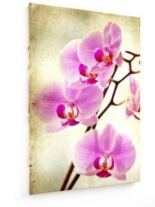 Rosa Orchidee - 50x75cm - Leinwandbild auf Keilrahmen - weewado - Wandbilder - Kunst, Gemälde, Fotografie - Blumen