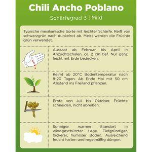 Chili Ancho Poblano | Samen für scharfe Chilis | Chilisamen | Anchosamen