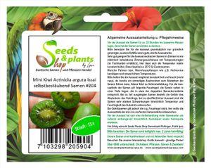 15x MINI Kiwi Actinidia arguta Issai Obst Pflanzen - Samen #204