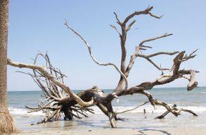 hansepuzzle 20456 Natur - Strand-Baum, 500 Teile in hochwertiger Kartonbox, Puzzle-Teile in wiederverschliessbarem Beutel.