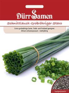 Dürr Samen - Schnittlauch Staro, grobröhrig