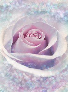 "Komar Vlies Fototapete ""Delicate Rose"", weiß/blau/rosa, 184 x 248 cm"