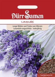 Dürr Samen - Lavendel