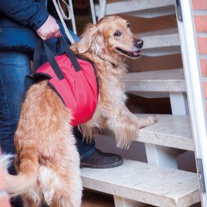 """Hunde-Tragehilfe """"Helping Harness"""" Zur Unterstützung beim Treppensteigen, auf Wanderungen oder beim Klettern über schwierige Passagen"""