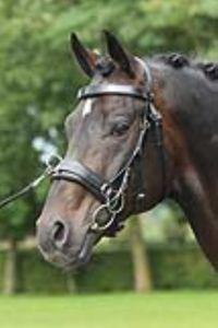 BUSSE Kappzaum FIT PRO, schwarz, Pony