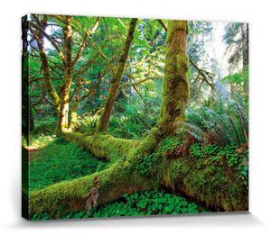 Wälder Poster Leinwandbild Auf Keilrahmen - Riesen-Wurzeln Im Regenwald (40 x 50 cm)