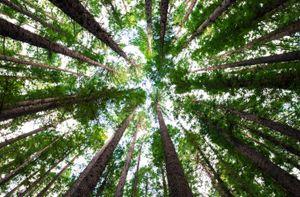 hansepuzzle 28571 Natur - Bäume, 500 Teile in hochwertiger Kartonbox, Puzzle-Teile in wiederverschliessbarem Beutel.