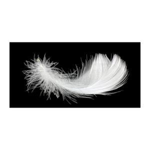 Tulup® Glas-Bild - 100x50 -Wandkunst - Wandbild hinter gehärtetem Sicherheitsglas  - Kunst: modern & klassisch - Feder - Weiß