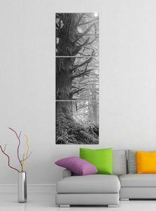 Leinwandbild 3tlg Dschungel Regenwald Wald Sonne schwarz weiß Bilder Druck auf Leinwand Vertikal Bild Kunstdruck mehrteilig Holz 9YA4974, Vertikal Größe:Gesamt  30x90cm