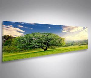 Bild Bilder auf Leinwand Schöner Baum in der Natur Landschaft Panorama - XXL Eyecatcher von islandburner Poster Leinwandbild Wandbild