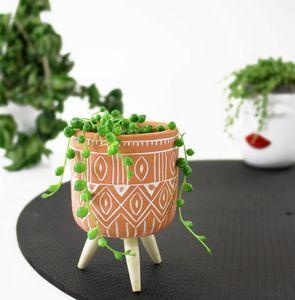Lebende Topfpflanze Senecio Rowleyanus PERLENSCHNUR Miniatur Hängend Perlenkette Zimmerpflanze Sämling Geschenkidee