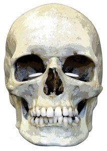 RUBIE'S Skull Horror Face Card Mask
