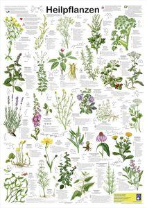 Heilpflanzen Poster deutsch DIN A1 84,1 x 59,4 cm