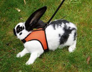 SPORT Kaninchengeschirr mit flexibler Leine 120cm