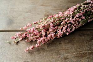 Delphinium natur pink im Bund ca. 60cm | Rittersporne getrocknet