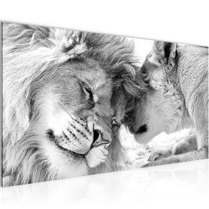Löwen Liebe BILD 100x40 cm − FOTOGRAFIE AUF VLIES LEINWANDBILD XXL DEKORATION WANDBILDER MODERN KUNSTDRUCK MEHRTEILIG 002112c