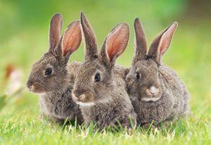 3 D Ansichtskarte Hasen, Häschen Kaninchen Postkarte Wackelkarte Hologrammkarte Tiere