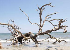 hansepuzzle 20455 Natur - Strand-Baum, 260 Teile in hochwertiger Kartonbox, Puzzle-Teile in wiederverschliessbarem Beutel.
