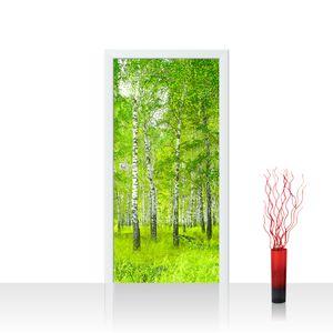 Tür Fototapete Vlies PREMIUM PLUS no. 112 - 100X211 cm Sunny Birch Forest Birkenwald Bäume Wald Sonne Birke Gras Natur Baum