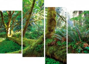 Wälder Poster Leinwandbild Auf Keilrahmen - Riesen-Wurzeln Im Regenwald, 4-Teilig (80 x 120 cm)