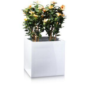Pflanzkübel CUBO 60 Fiberglas Blumenkübel, 60x60x60 cm (L/B/H), Farbe: weiß hochglanz