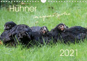 Hühner im eigenen Garten (Wandkalender 2021 DIN A4 quer)
