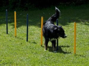 Hundetrainings-Set, Agility, Slalom, Hürde, Tunnel, Starter-Set
