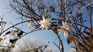 Lichterkette LED mit 10 weißen Sternen -je ca. 10,5  cm Durchmesser- Außenstern [Energieklasse A++]