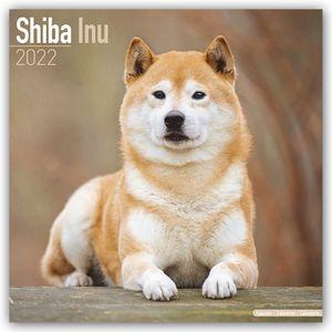 Shiba Inu 2022 - 16-Monatskalender
