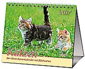 Katzen 2017
