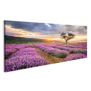 Bild Bilder auf Leinwand atemberaubende Landschaft mit Lavendelfeld bei Sonnenaufgang Wandbild, Poster, Leinwandbild NCM