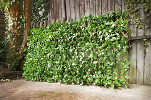 Sichtschutz 'Immergrün', Garten Terrasse Sichtschutz Trenner Blickdicht Pflanzen