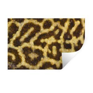 Wandaufkleber - Nahaufnahme von Leopardenmustern - 60x40 cm - Repositionierbar