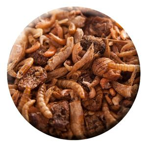 KENKOU® Mehr Sorten Mix - Koifutter |1 kg | Koifutter | Reptilienfutter | Trockenfutter |