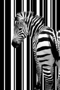Zebras Selbstklebende Fototapete Poster-Tapete - Barcode Zebra (180 x 120 cm)
