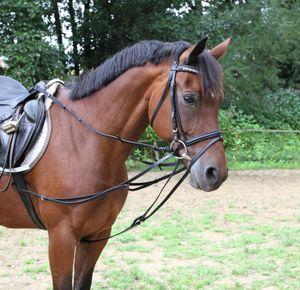 Kerbl Dreieckszügel, schwarz Größe Pony