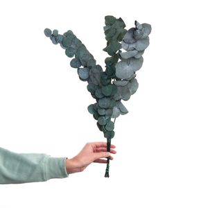 BUTLERS FLOWER MARKET Trockenblumen Eukalyptus Länge 60cm