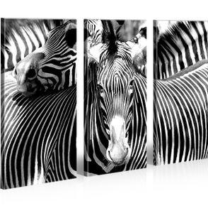 Bilder auf Leinwand Zebra Tiere Zebras Kunstdruck XXL Bild Poster Leinwandbilder Wandbilder