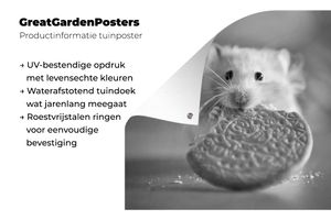 Gartenposter - Hamster mit einem halb gegessenen Keks - schwarz und weiß - 100x100 cm