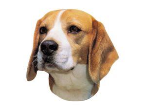 Nobby Aufkleber Beagle 120 x 150 mm; 2er Set