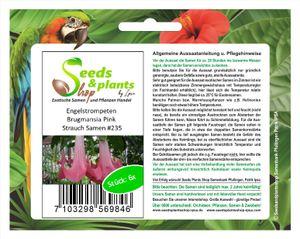 6x Engelstrompeten Brugmansia Pink Strauch Pflanzen - Samen #235