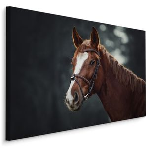 Fabelhafte Canvas LEINWAND BILDER 40x30 cm XXL Kunstdruck Natur Pferd Wald Bäume